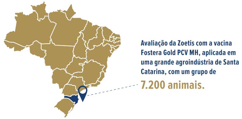 Avaliação da Zoetis com a vacina Fostera Gold PCV MH, aplicada em uma grande agroindústria de Santa Catarina, com um grupo de 7.200 animais.