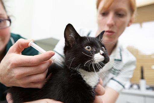 Foto de gato sendo vacinado por uma veterinária e sua assistente.